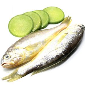 新鲜小黄鱼海产2斤装
